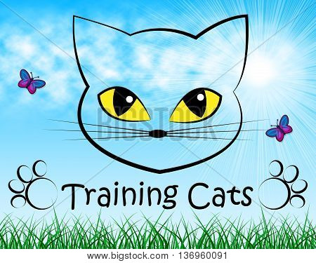 Training Cats Represents Pet Kitty And Trainer