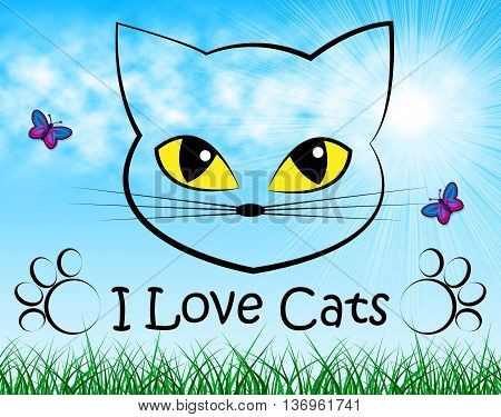Love Cats Shows Tenderness Pedigree And Passion