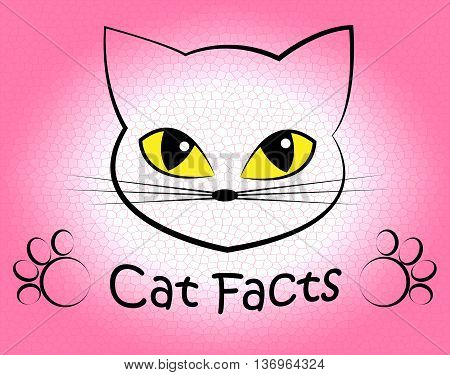 Cat Facts Shows Truth Data And Felines