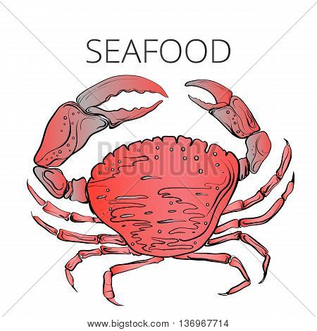 seafood red crab, hand painted red crab, vector illustration