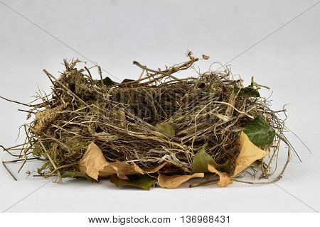 Bird nest on a white background. Birds nest.
