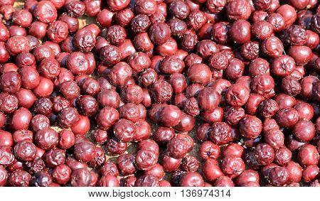 picture of a Rotten sour cherry backgorundorganic pollution