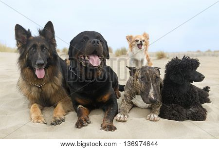 five dogs staying on the beach in summer