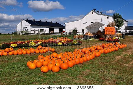 Ronks Pennsylvania - October 16 2015: Pumpkins gourds and Chrysanthemums are spread out on the lawns at the Pumpkin Patch farm