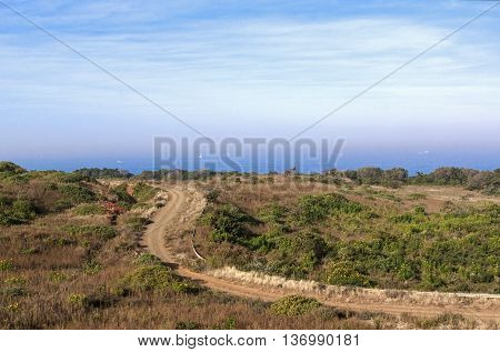 Winding Dirt Road Through Natural Vegetation