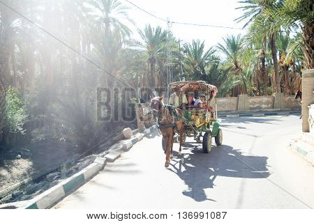 Carriage In Tozeur Oasis