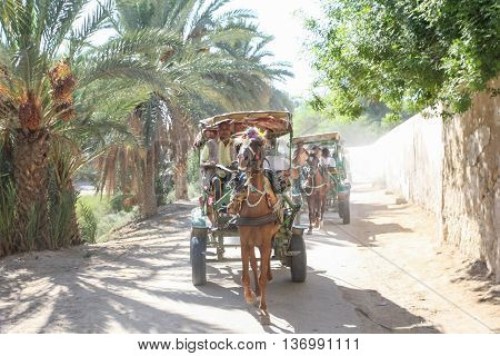 Carriage Rides In Tozeur Oasis