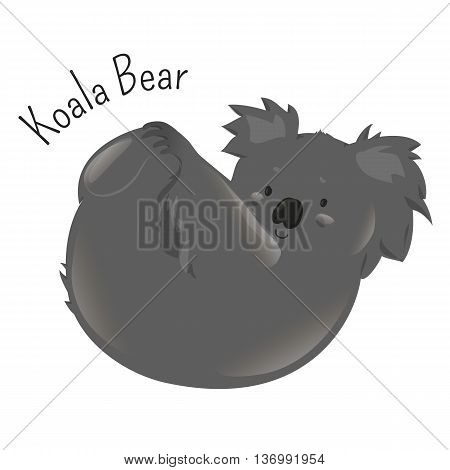 Koala bear isolated on white background. Phascolarctos cinereus. Arboreal herbivorous marsupial. Australia calligraphic. Part of series of various australian animal species. Wildlife concept. Vector