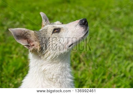Portrait of adorable mixed breed young dog looking up