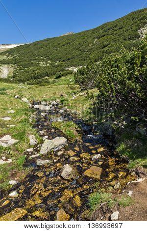 Clean waters of small mountain river in Pirin, Bulgaria