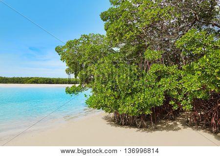Florida bonita Bay beach mangrooves in USA