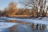 stock photo of cottonwood  - partially frozen Cache la Poudre River with cottonwood trees at Fort Collins Colorado - JPG