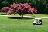 stock photo of crepe myrtle  - a photo of a golf cart by a crape myrtle - JPG