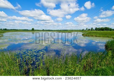 Waterlilies And Clouds
