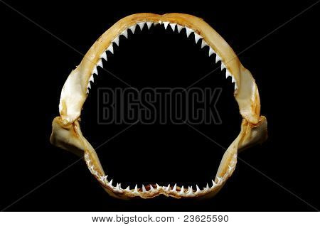 shark teeth