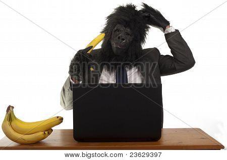 The confused gorilla.