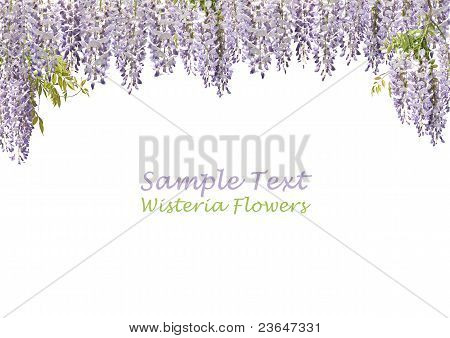 Wisteria Flower Curtains