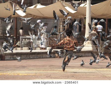 Boy Scattering Pigeons