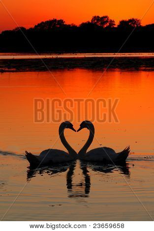 Swans Heart Sunset