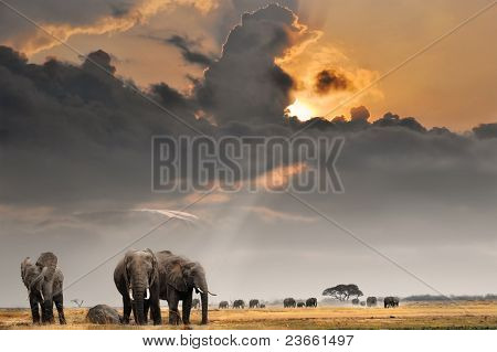 African sunset with elephants
