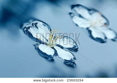 Spring Flowers In Water