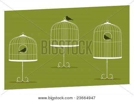 Carrinhos gaiola