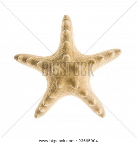 Starfish Isolated on White