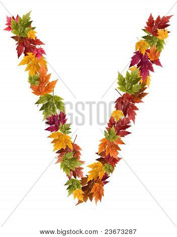 The letter V made from autumn maple tree leaves