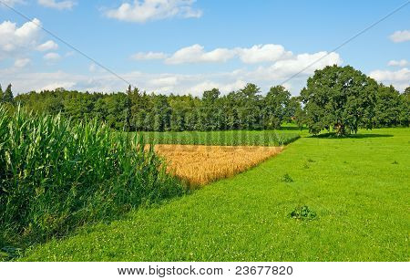 Fields In Bavaria