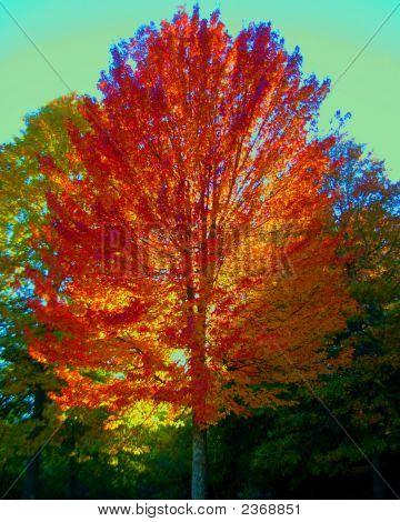 Octobers Glory