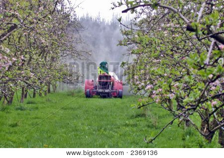 Spraying Apples
