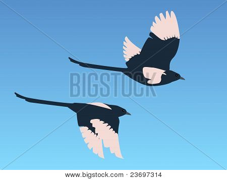 Magpies In Flight