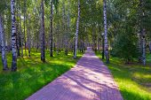 Awesome Look With Colorful Summer Landscape Of The Park. Beautiful Landscape With Trees, Walkway And poster
