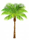 Coconut Palm Tree. Plant, Garden, Resort. Nature Concept. Can Be Used For Topics Like Vacation, Trav poster