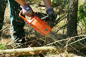 foto of tree trim  - Lumberjack trimming a fir tree log with a chainsaw - JPG