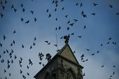 Medieval Architecture, Dramatic Sight, Classy Style, Mystery Concept. Flock Of Birds Flying On Dark  poster