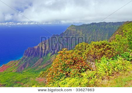 Tropical Plants On A Rugged Island