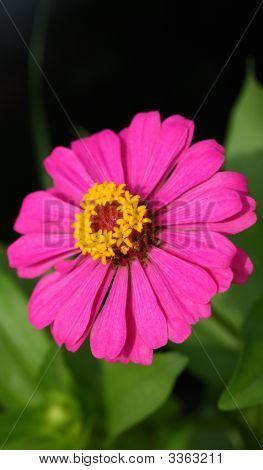 A-Flower  230708006