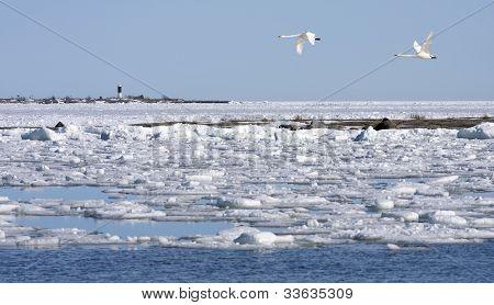 bricht das Eis auf dem Meer und Juchaza kommt.