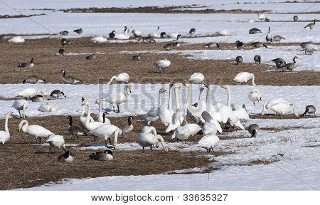 Birds rest on a field.