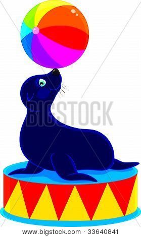 Circus Sea bear