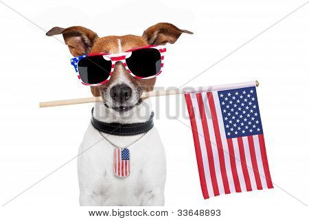 Dog americano