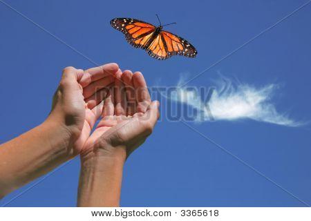 Monarchfalter veröffentlicht