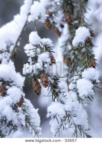 Snowy Cones