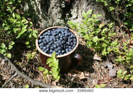 Antioxidant Berry In Green Forest