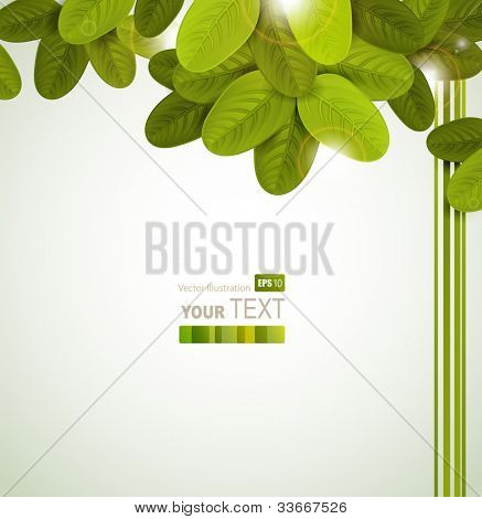 Season tree with green oval leaves