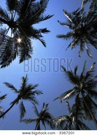 Puerto Vallarta Palms
