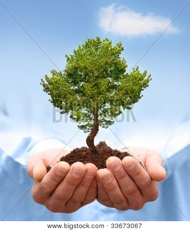 Man hands holding a green tree. Ecology concept