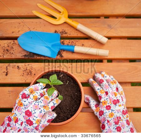 Spring in the garden, potting flowers