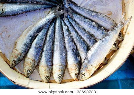 brine salted sardines fish in round wood box in Mediterranean